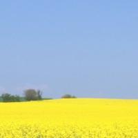 がん克服 生還への道