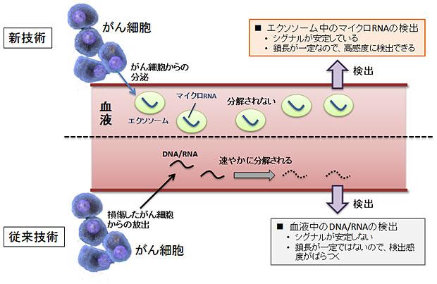マイクロRNAの特徴