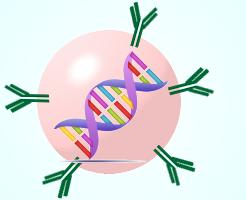 劇的効果の免疫細胞療法